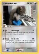chat américain