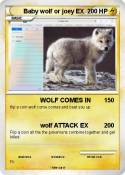 Baby wolf or