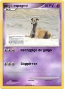 galgo espagnol