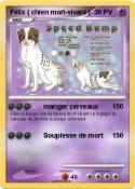 Félix ( chien
