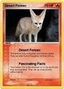 Desert Fennec
