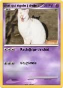 chat qui rigolo