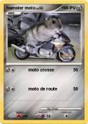 hamster moto