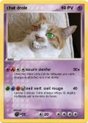 chat drole