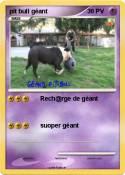 pit bull géant