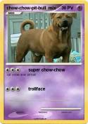 chow-chow-pit-bull