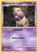 boxer-airedale