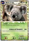 Mister Koala