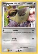 Pidgey (real