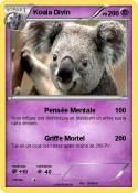Koala Divin