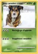 loup canadien