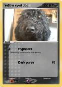 Yellow eyed dog
