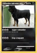 rottweiler-labrador