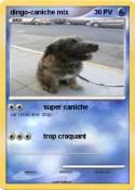 dingo-caniche