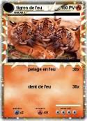 tigres de feu