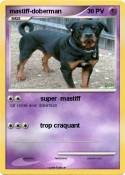 mastiff-doberman