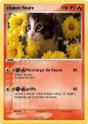 chaton fleure