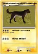loup/foxhound