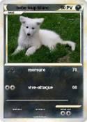 bebe loup blanc