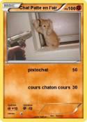Chat Patte en