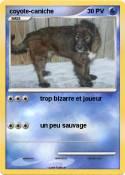 coyote-caniche