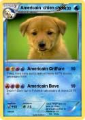 Americain chien