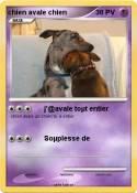 chien avale