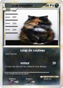chat meurtrier