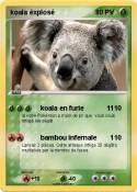 koala éxplosé