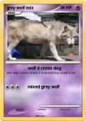 grey wolf mix