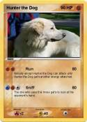 Hunter the Dog