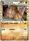 tortue chat