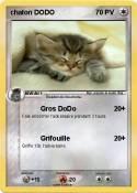 chaton DODO