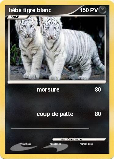 Pok mon bebe tigre blanc 3 3 morsure ma carte pok mon - Bebe tigre mignon ...